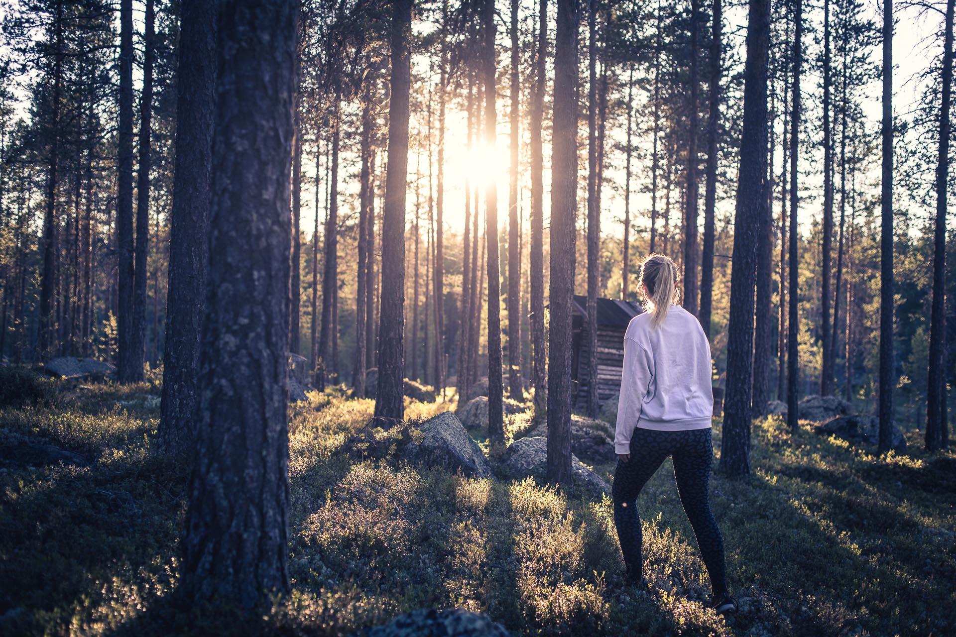Katta till skogs en juninatt
