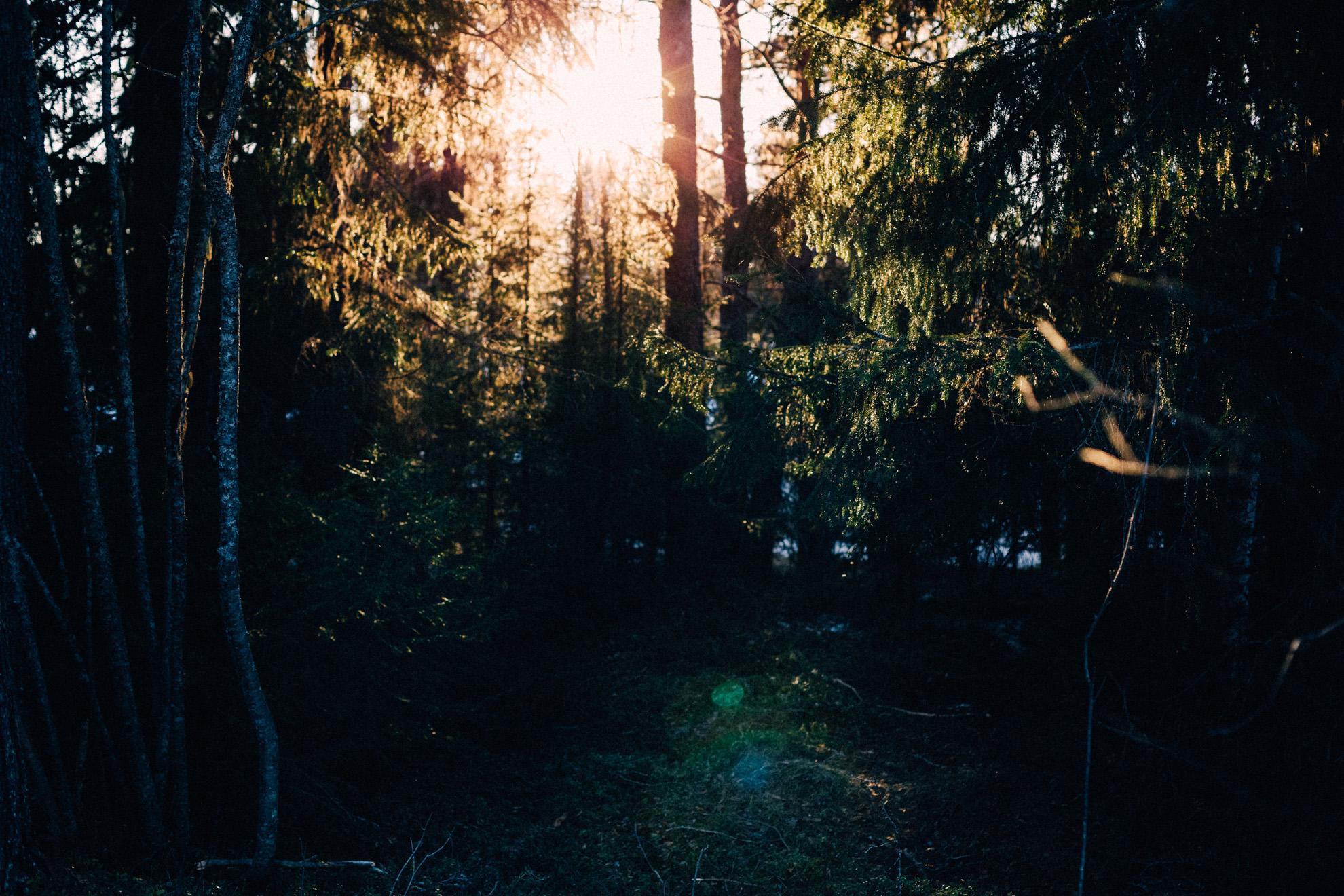 Skog i solnedgång
