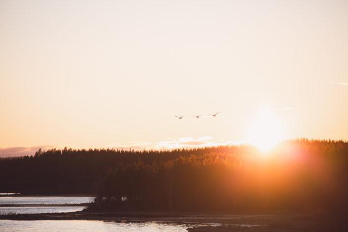Fåglar i solnedgång